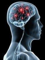increased brain function