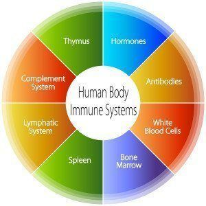 the human body immune systems chart.