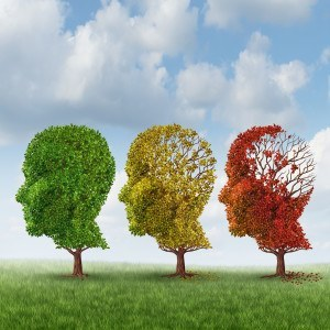 Alzheimer's disease with the medical icon of a group of color changing autumn fall trees in the shape of a human head losing leaves as a loss of thoughts and intelligence function.