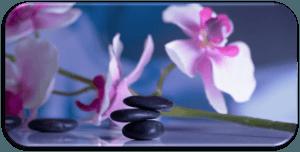 meditation-orchid